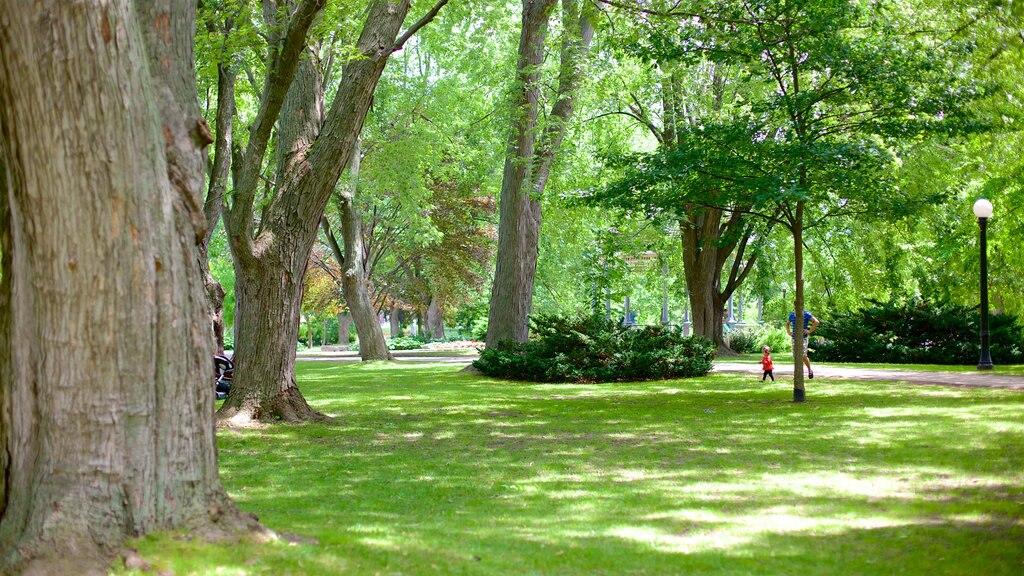 Kitchener que incluye un parque