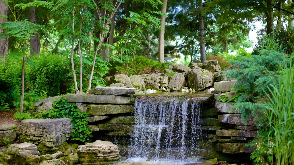Guelph showing a garden and a waterfall