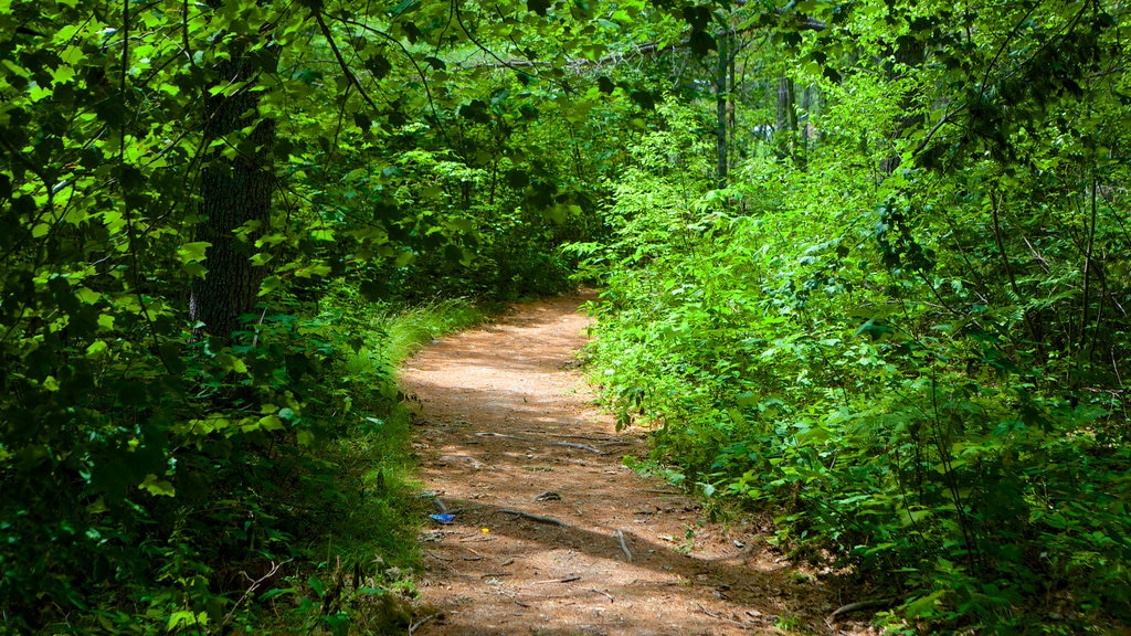 Kingston mostrando un parque y escenas forestales