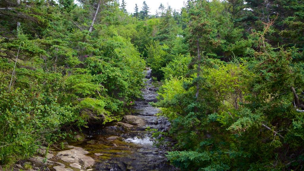 Kingston ofreciendo un río o arroyo y escenas forestales