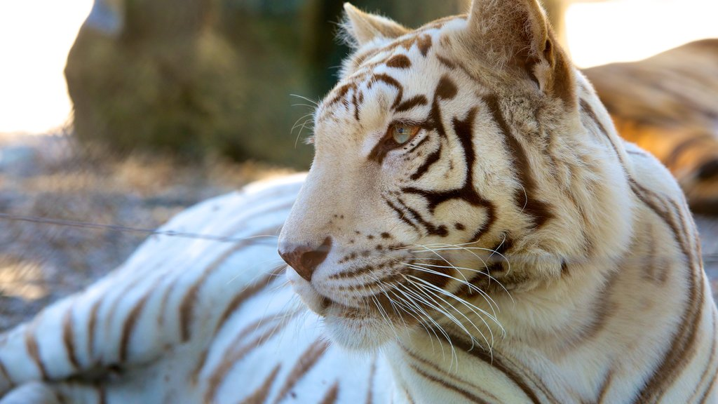 West Coast Game Park Safari which includes dangerous animals and land animals
