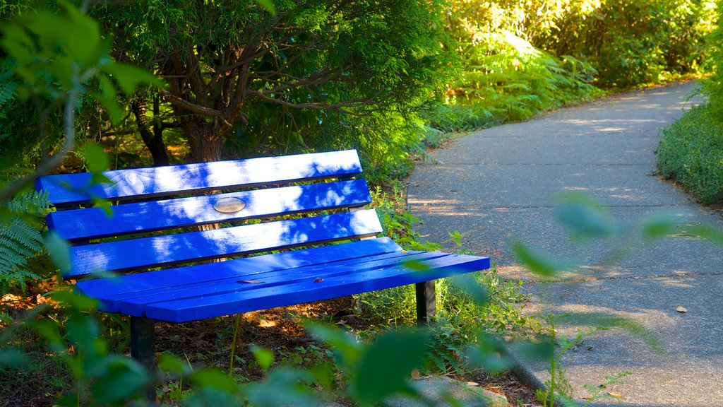 Azalea Park showing a park