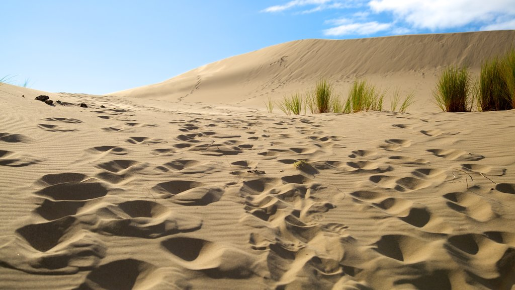 Oregon Dunes National Recreation Area featuring desert views and landscape views