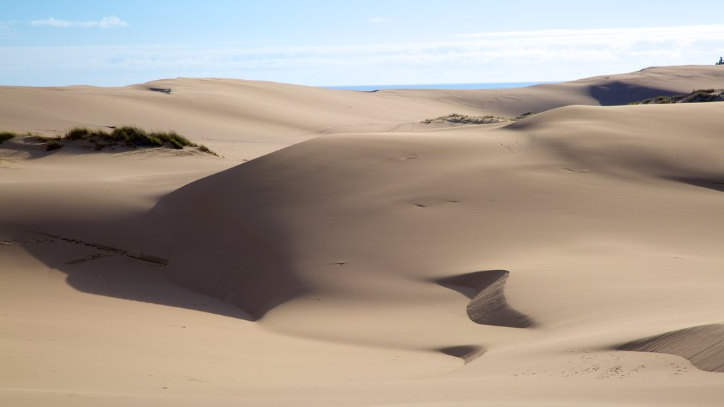 Oregon Dunes National Recreation Area showing landscape views and desert views
