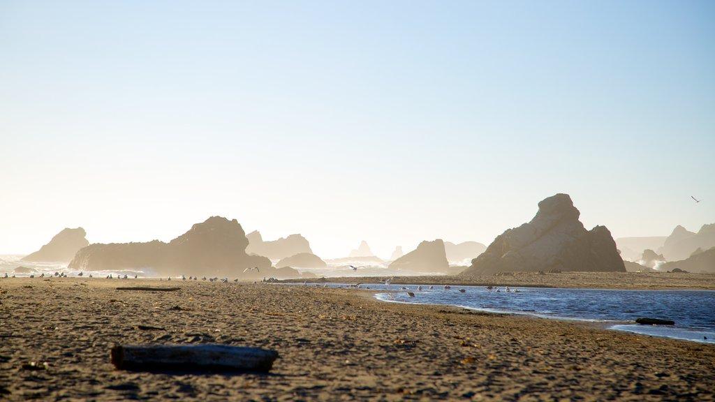 Parque estatal Harris Beach que incluye una playa de arena