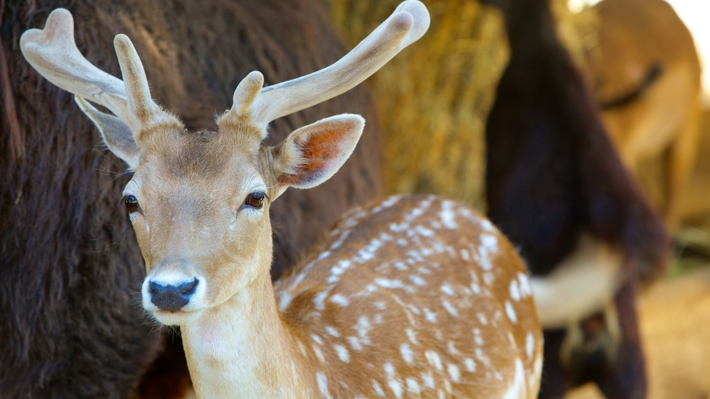 West Coast Game Park Safari which includes cuddly or friendly animals