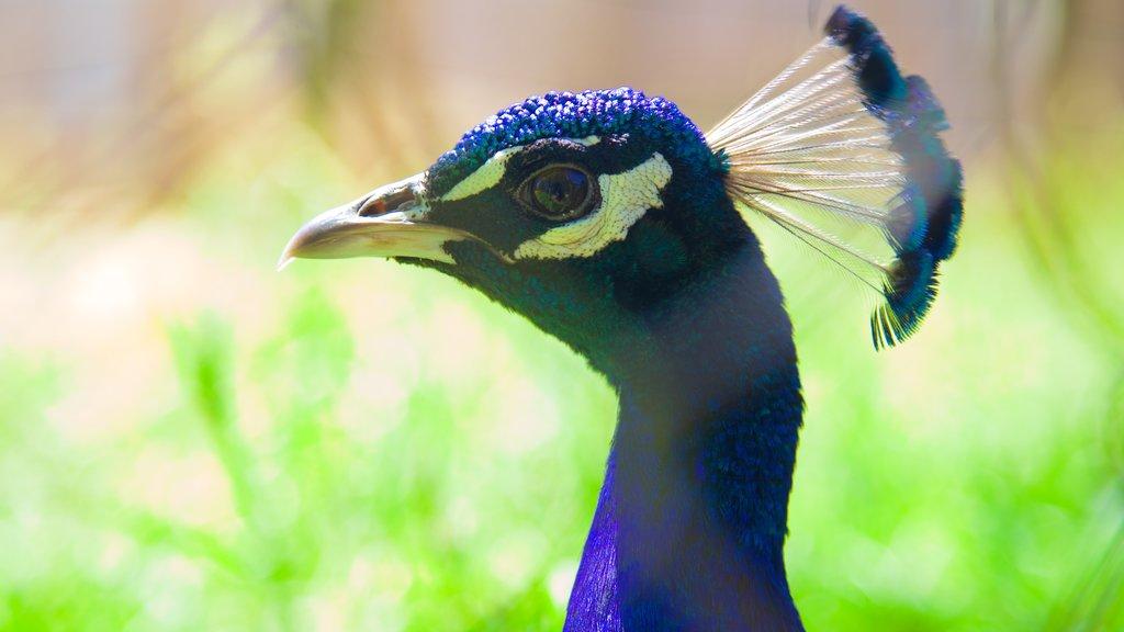 West Coast Game Park Safari showing bird life