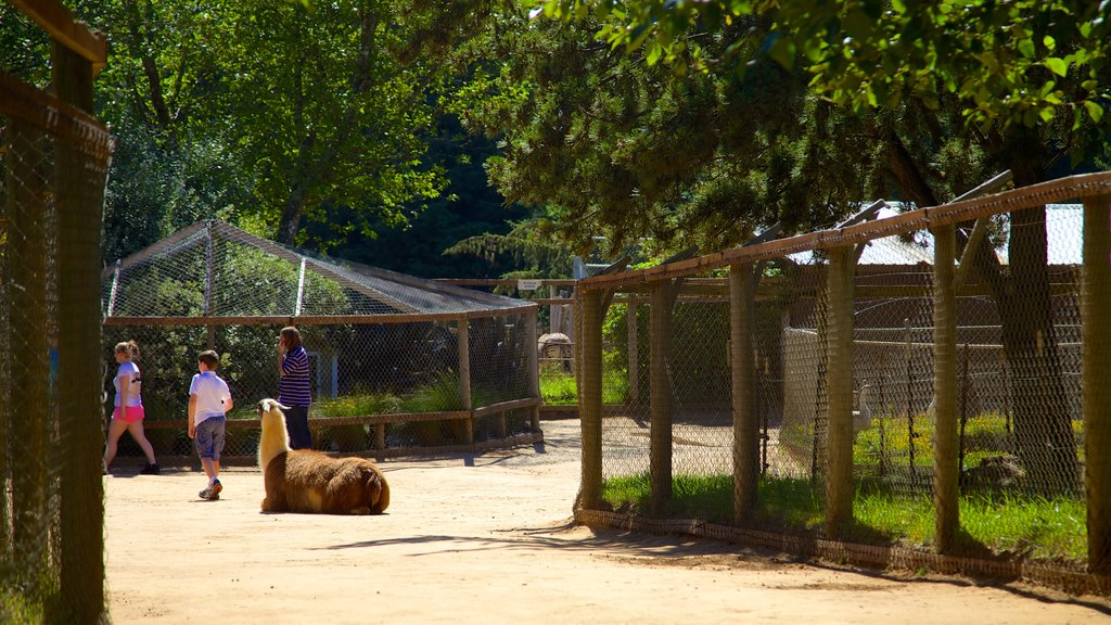 West Coast Game Park Safari featuring land animals and zoo animals