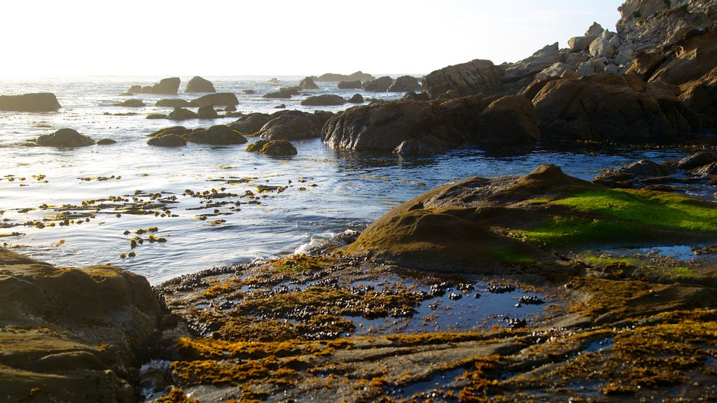 Cape Arago State Park which includes rugged coastline
