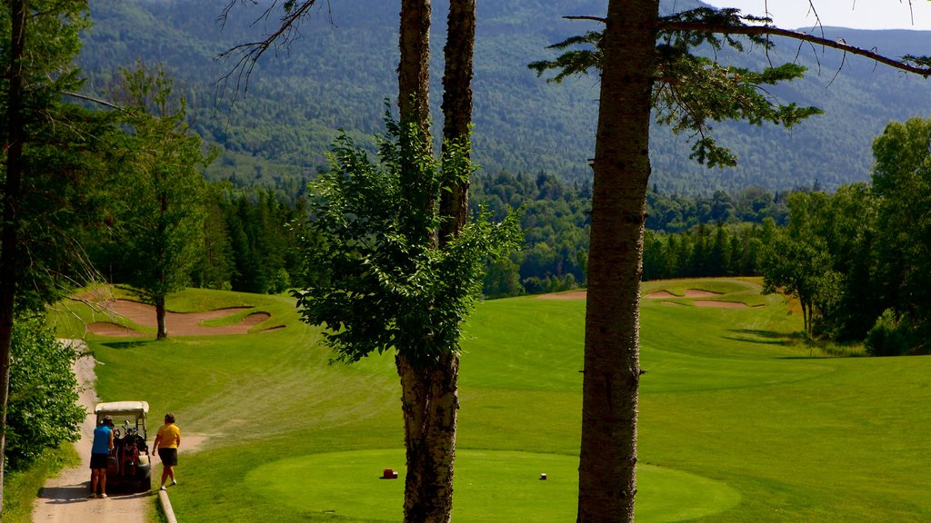 Humber Valley which includes golf as well as a small group of people