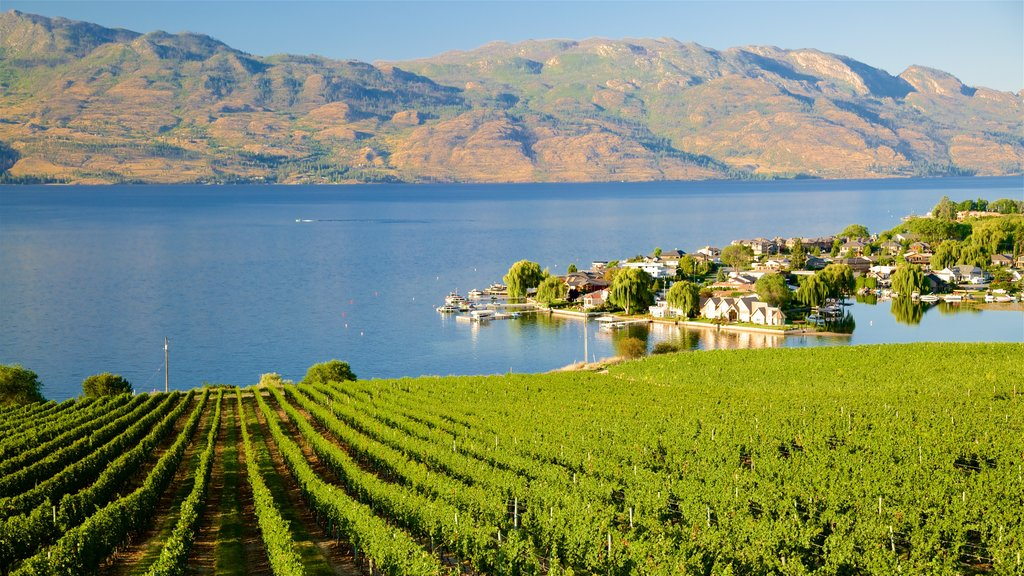 Quails\' Gate Estate Winery which includes a river or creek and farmland