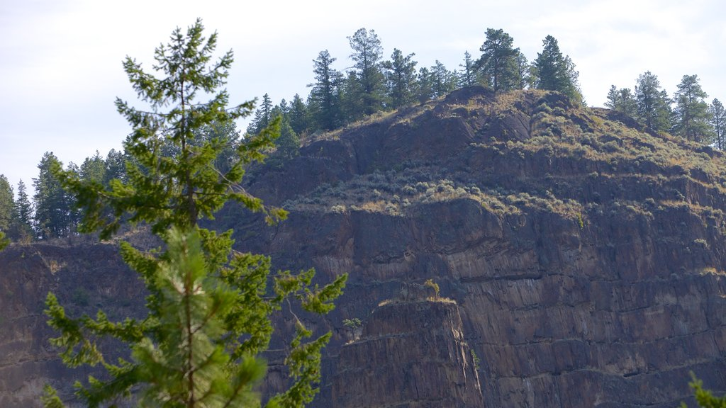 Scenic Canyon Regional Park which includes a gorge or canyon