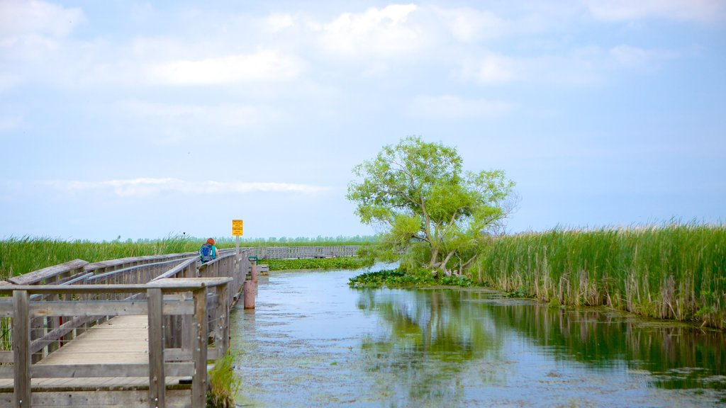 Point Pelee National Park which includes a lake or waterhole and a bridge
