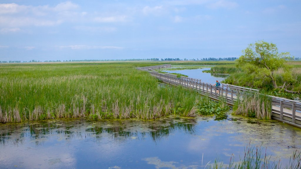 Point Pelee National Park featuring wetlands and a bridge