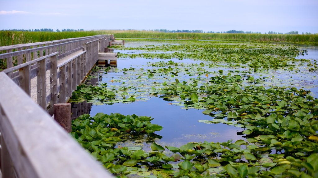 Point Pelee National Park showing a bridge and wetlands