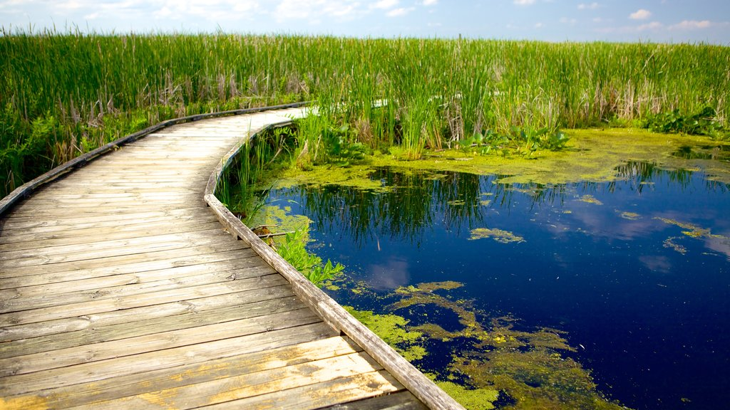 Point Pelee National Park showing a pond, a bridge and wetlands