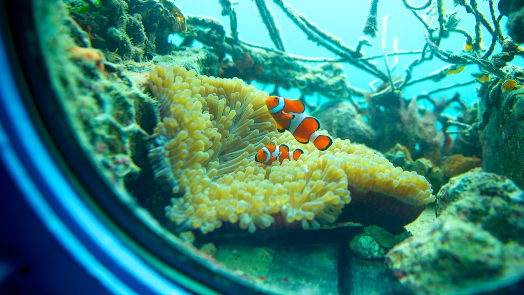 Busena Marine Park showing marine life and interior views