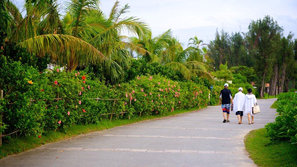 Busena Marine Park showing a park