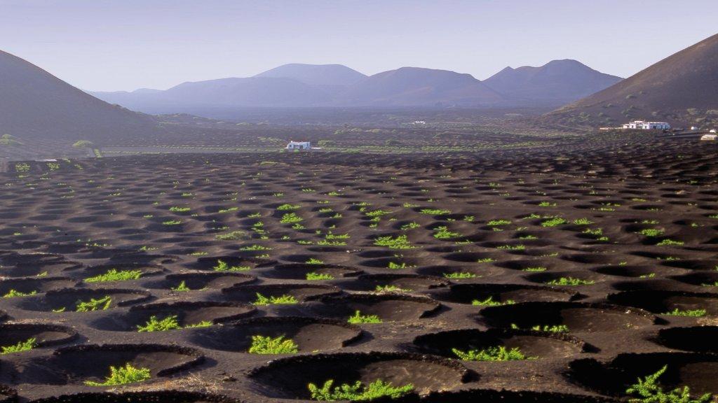 Lanzarote showing farmland