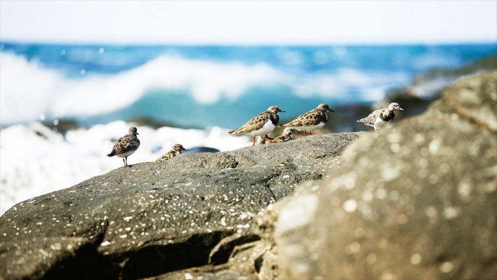 Agaete which includes bird life