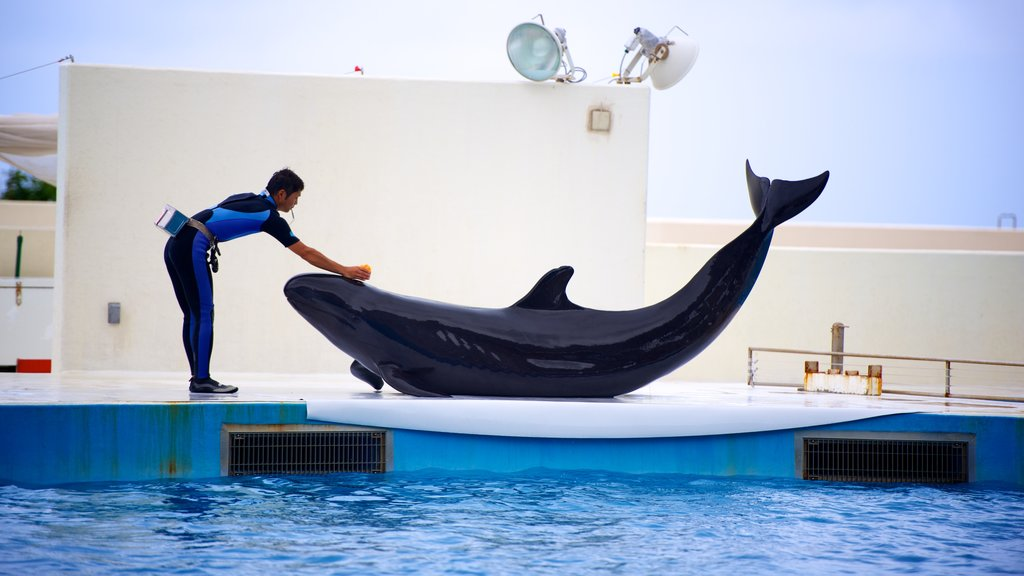 Okichan Theater which includes marine life and performance art as well as an individual male