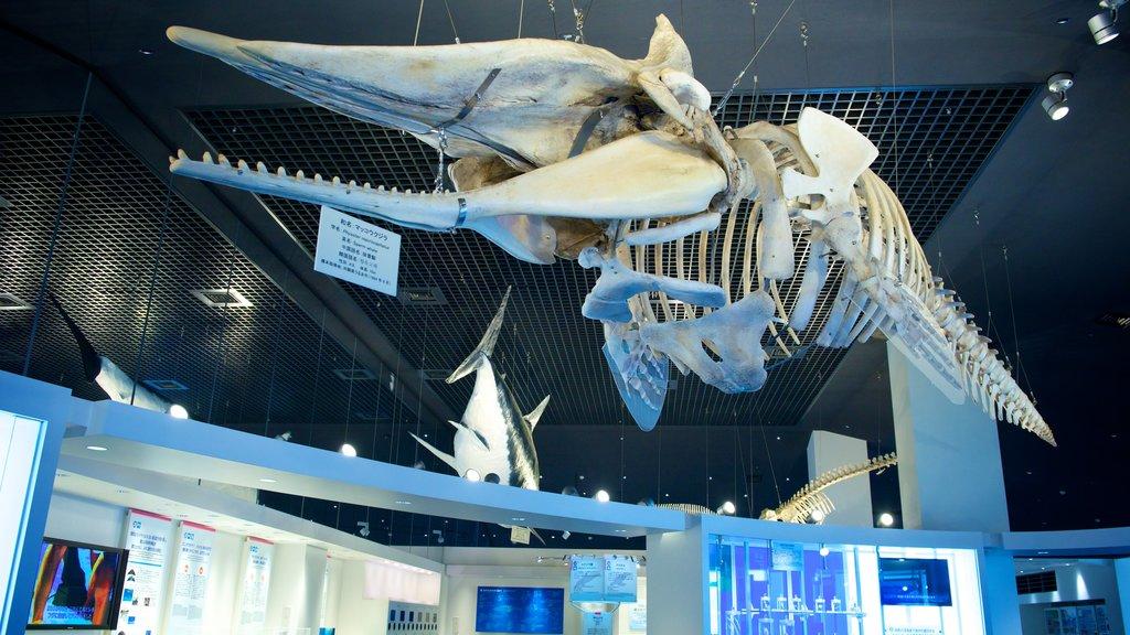 Okinawa Churaumi Aquarium which includes interior views and marine life