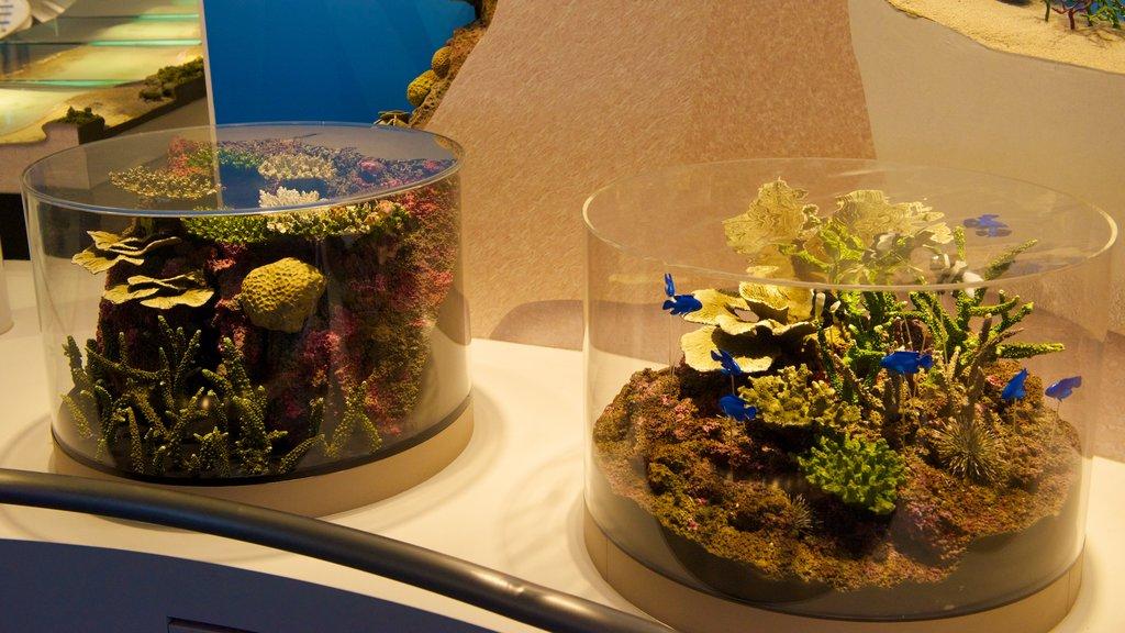 Okinawa Churaumi Aquarium showing interior views and marine life