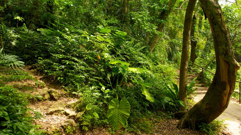 Okinawa featuring forest scenes