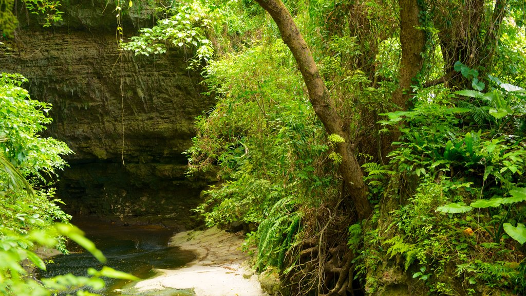 Okinawa showing forest scenes