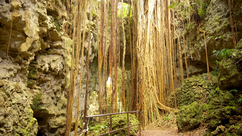 Okinawa which includes caves