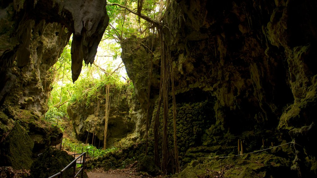 Okinawa featuring caves