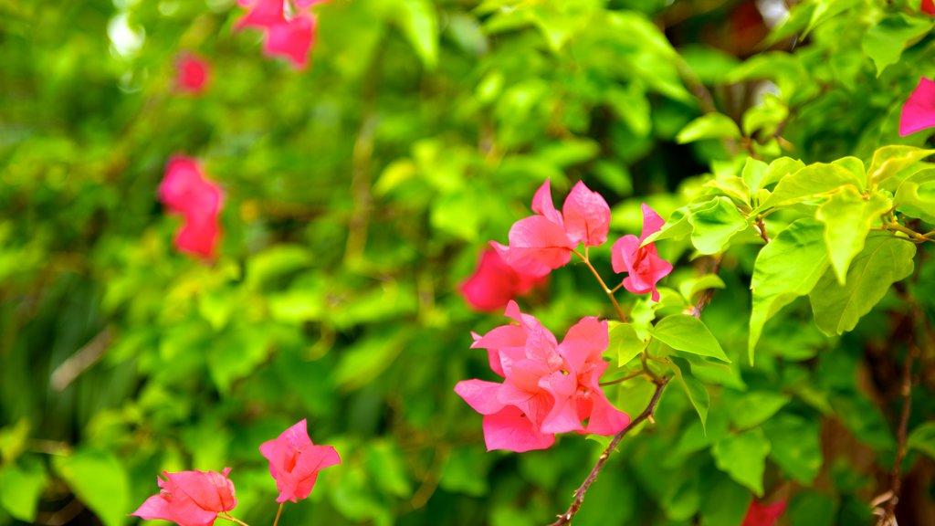 Ryukyu Mura featuring flowers