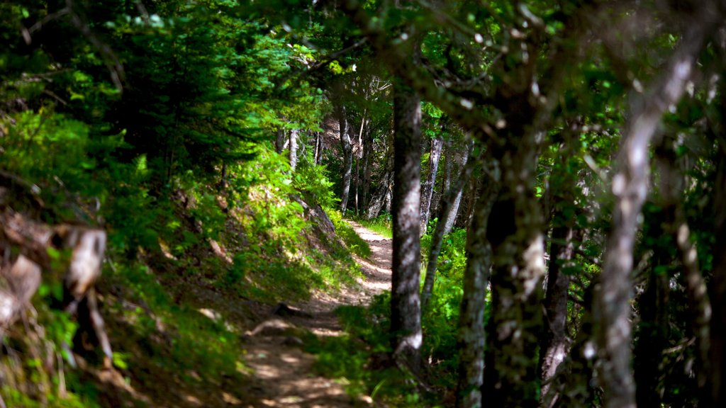 Cape Breton Highlands National Park que incluye bosques