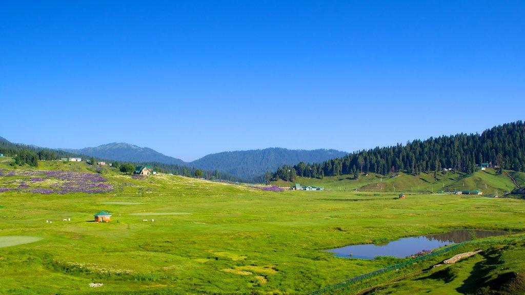 Gulmarg mostrando escenas tranquilas y vistas de paisajes