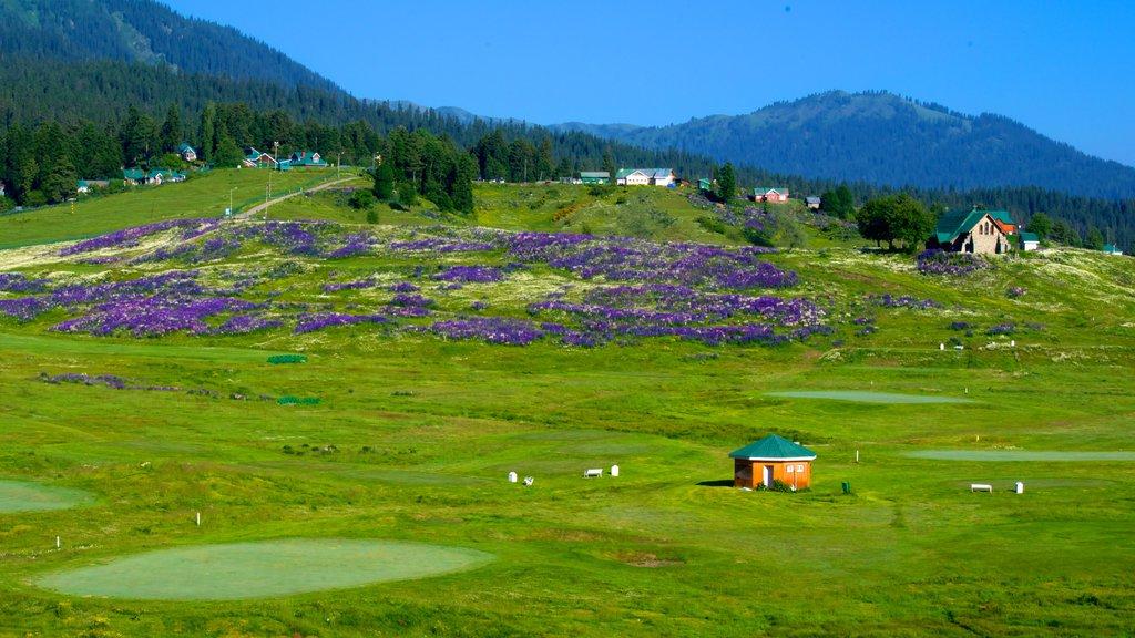 Gulmarg que incluye escenas tranquilas y flores silvestres