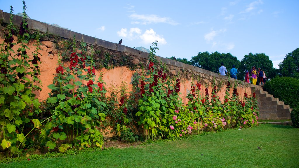 Mughal Gardens featuring flowers