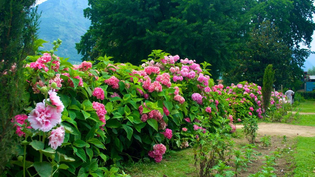 Shalimar Bagh showing flowers