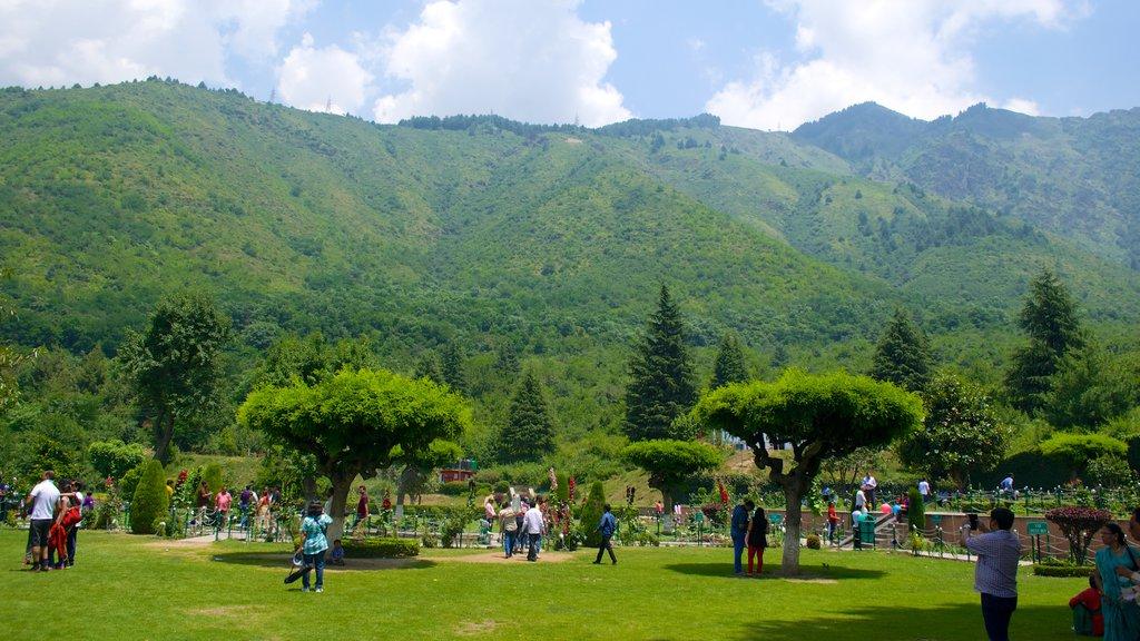 Chashma Shahi Garden showing a park
