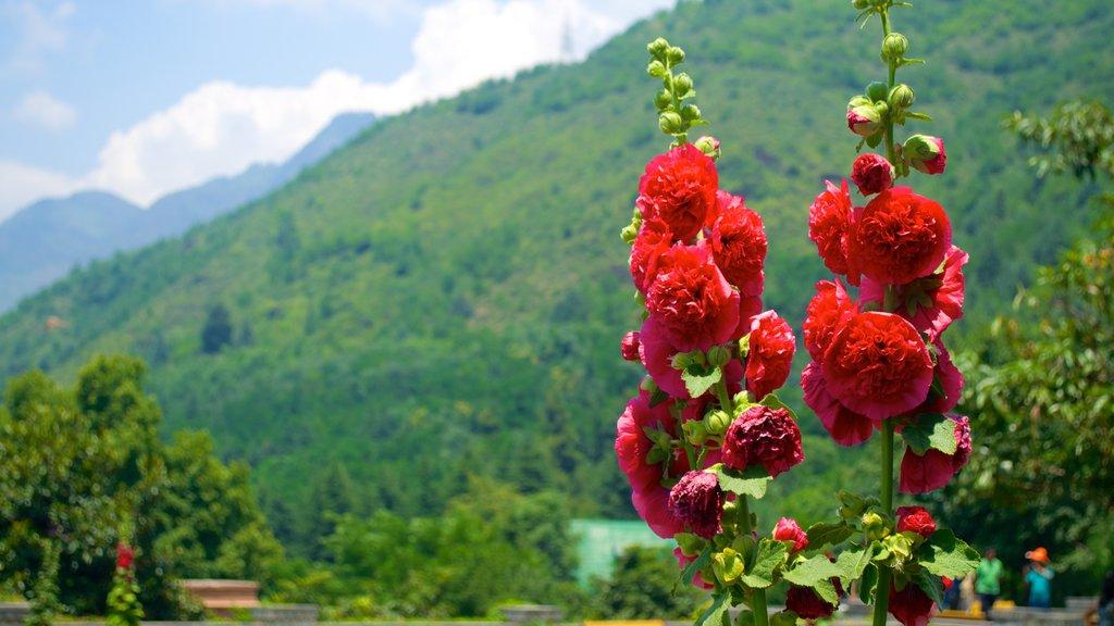 Chashma Shahi Garden showing flowers