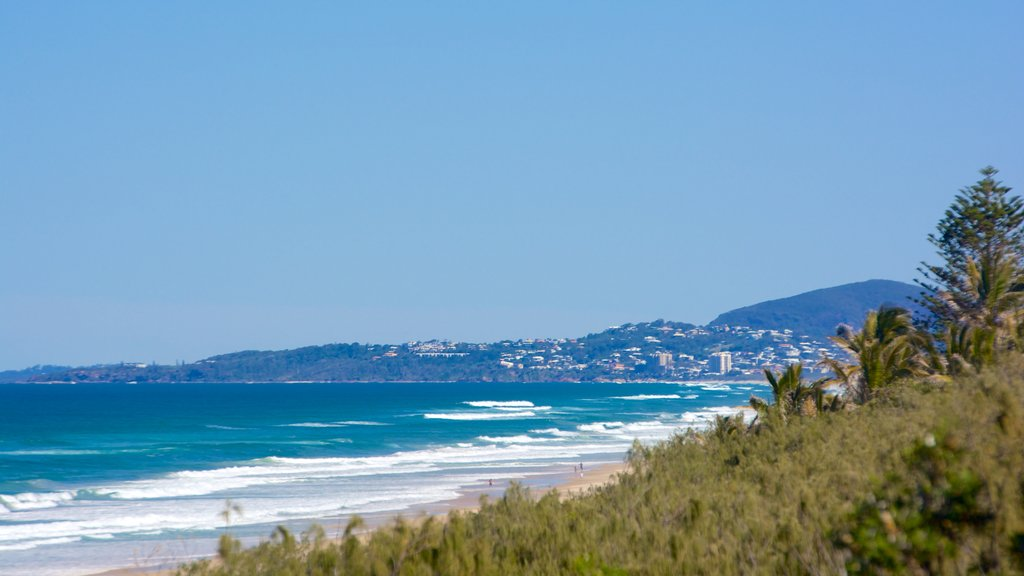 Sunshine Beach showing general coastal views