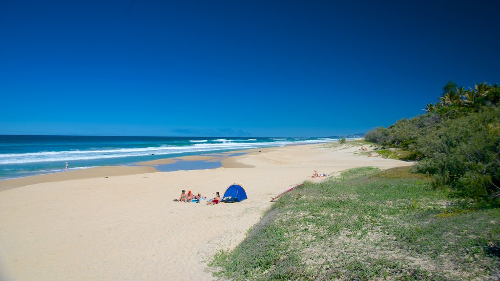 Sunshine Beach showing a sandy beach