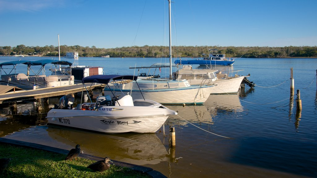 Noosa featuring boating, general coastal views and a bay or harbor