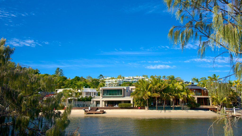 Noosa showing a coastal town, general coastal views and tropical scenes