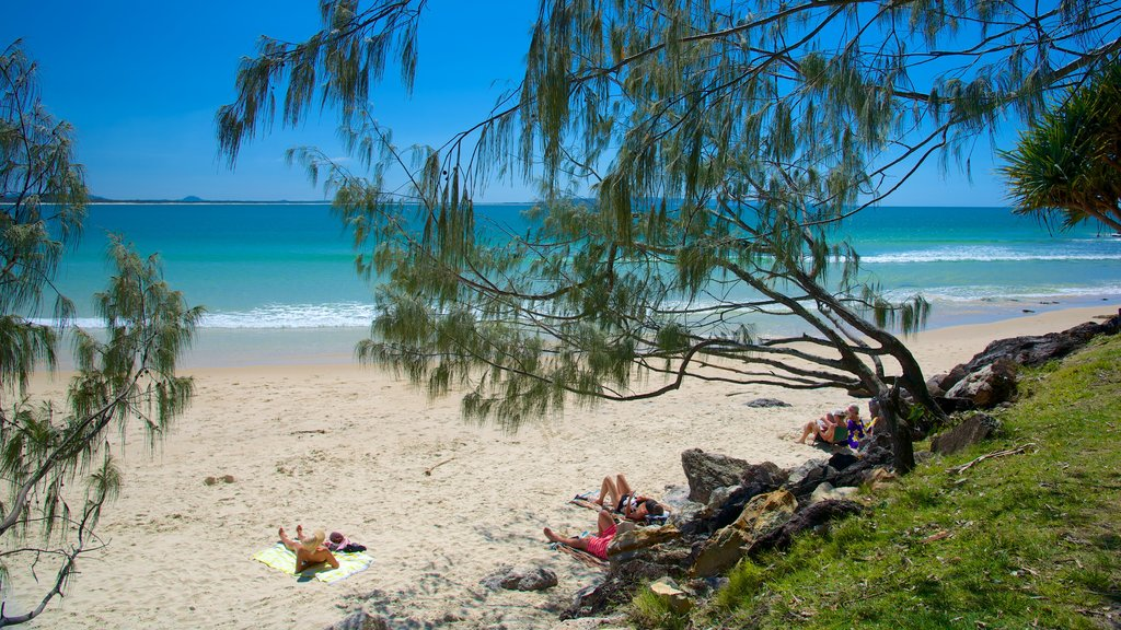 Noosa Beach which includes a sandy beach