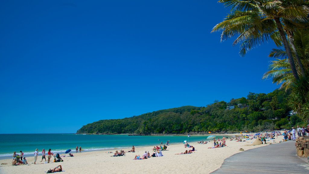 Noosa Beach featuring a sandy beach as well as a large group of people