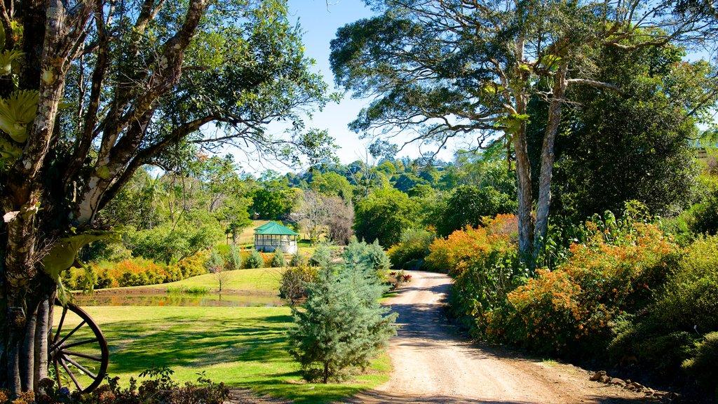 Maleny Botanic Gardens showing a park