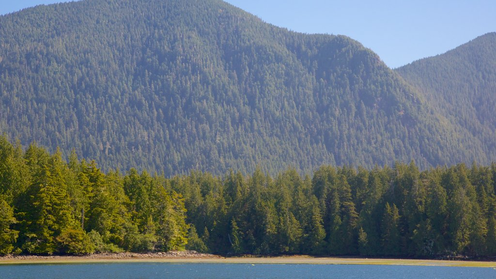 Tofino showing forests, general coastal views and mountains