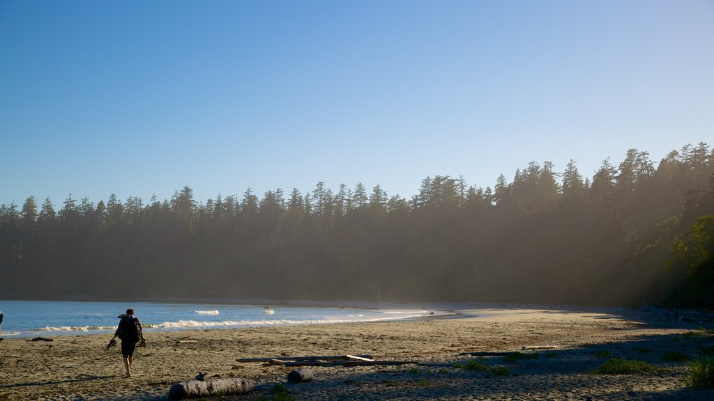 Pacific Rim National Park Reserve featuring forest scenes and a sandy beach as well as an individual male