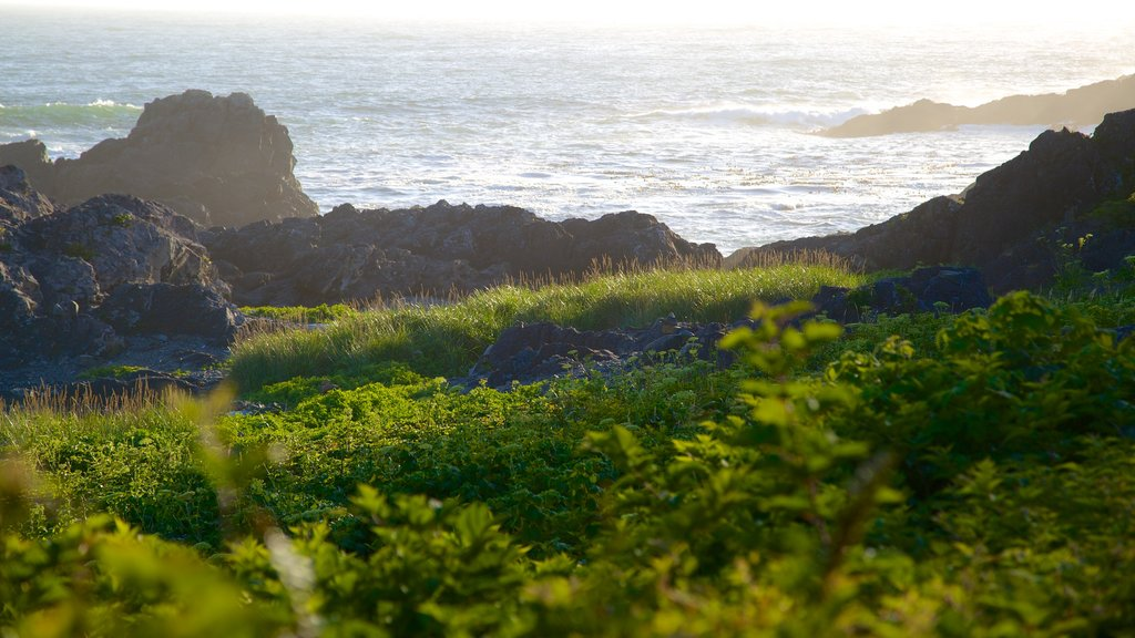 Wild Pacific Trail featuring rocky coastline and general coastal views