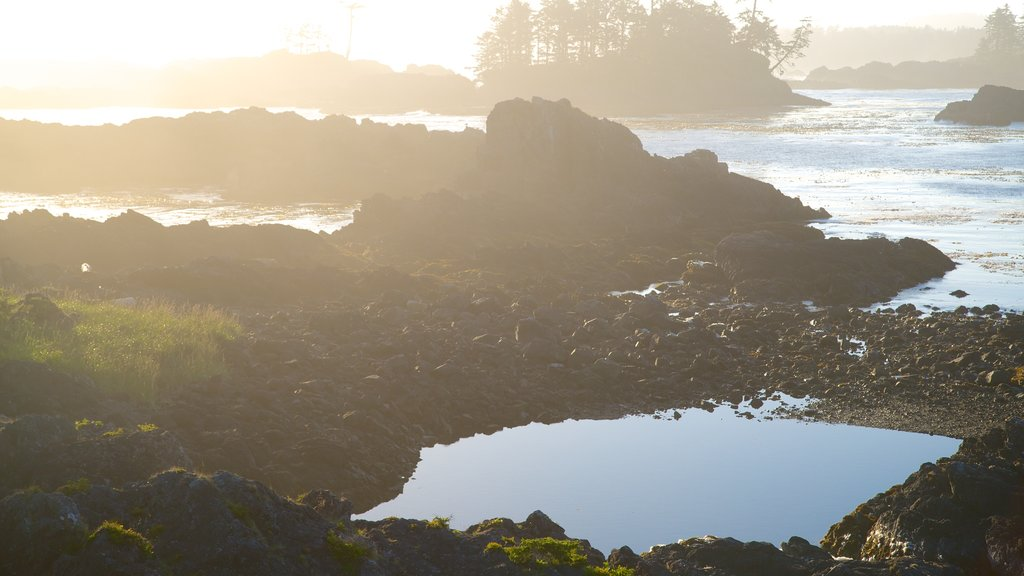 Wild Pacific Trail showing rugged coastline, mist or fog and general coastal views